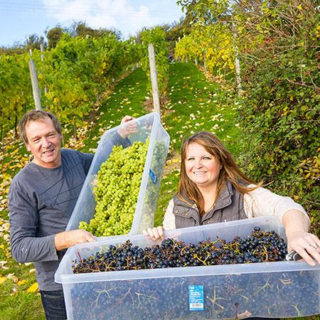 Gwinllan Conwy vineyard opens next door