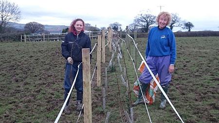 Hedge Planting Scheme
