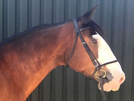 Sam is a 15.3hh Cob x clydesdale and has been with us since early 2018